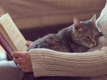 reading with a cat