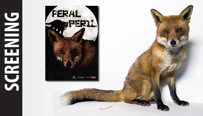 screening-feral-peril