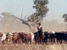the last great cattle drive